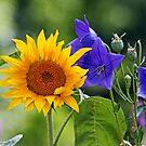 Sunflower Summer by Eileen McVey