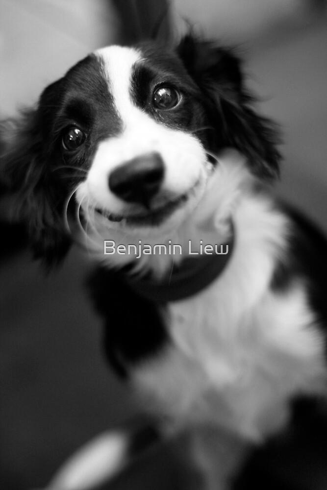 Smiling dog by Benjamin Liew