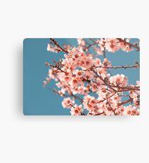 Pink Flowers Blooming Peach Tree at Spring Metal Print