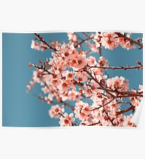 Pink Flowers Blooming Peach Tree at Spring Poster