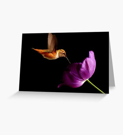 HUMMINGBIRD AND PURPLE TULIP~ Greeting Card