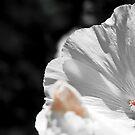White flower detail by wildrain