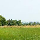 Green field panorama with hayracks by wildrain
