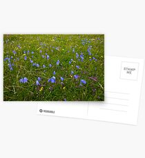 A sea of Harebells, Rossbeg, Co Donegal Postcards