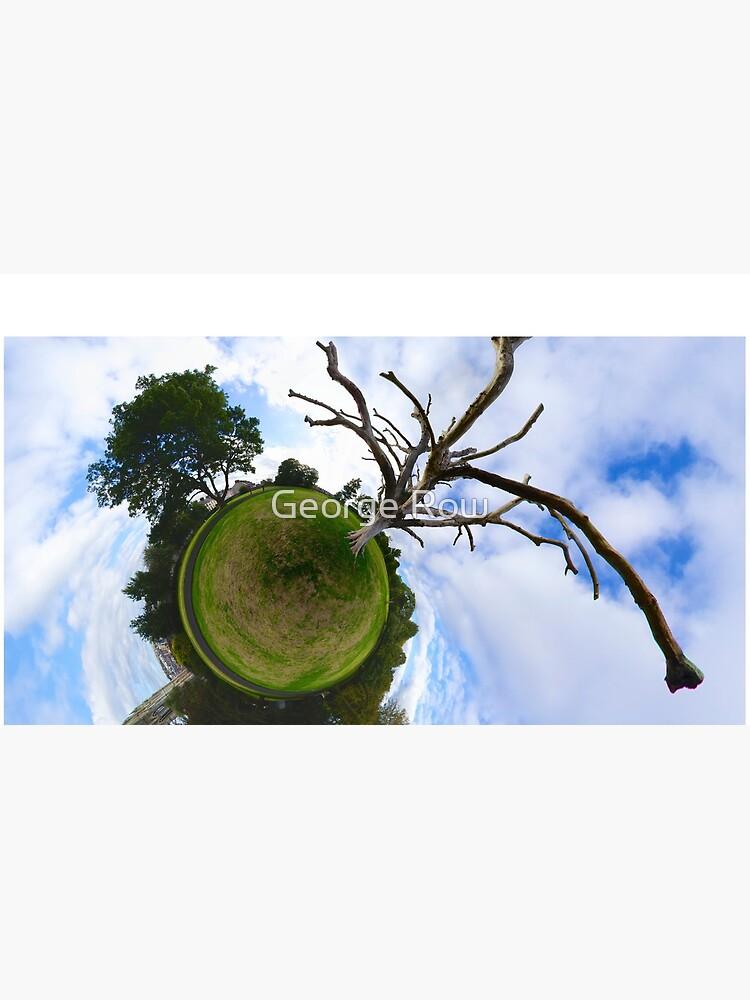 Dead Elm Tree in Brooke Park, Derry by VeryIreland