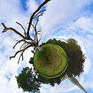 Dead Elm Tree in Brooke Park, Derry by George Row