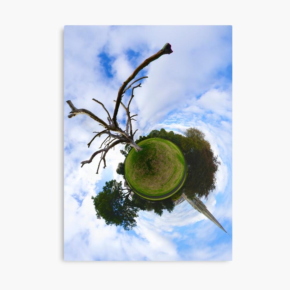 Dead Elm Tree in Brooke Park, Derry Canvas Print