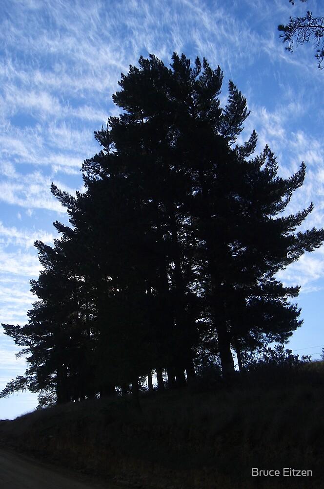 Pine Trees by Bruce Eitzen