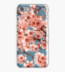 Pink Flowers Blooming Peach Tree at Spring iPhone Case/Skin