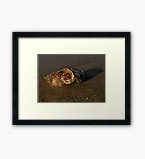 Hermit Crab on Fahan Beach Framed Print