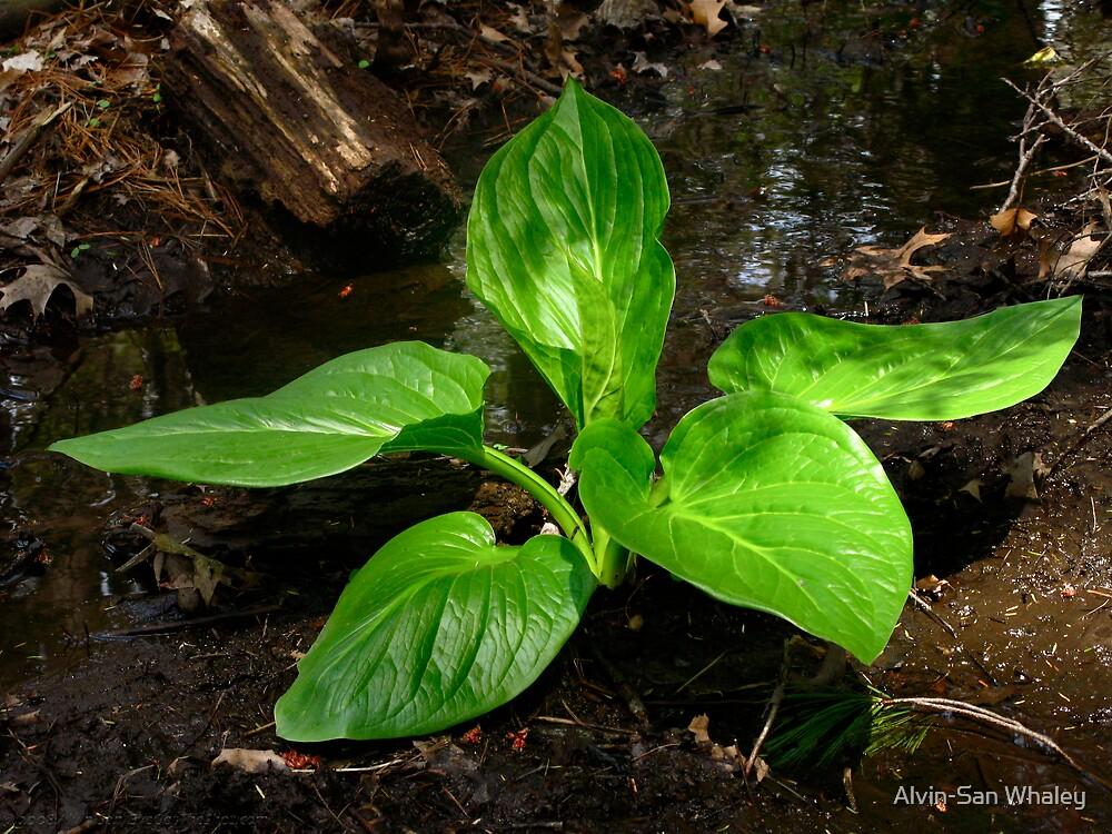 Verde Vivé by Alvin-San Whaley