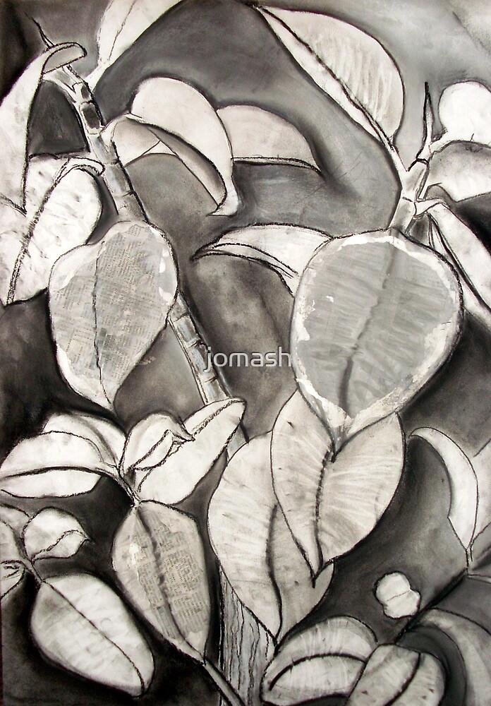 Plant study by jomash