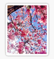 Magnolia blossoms Sticker