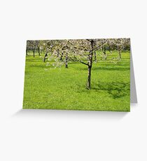 Spring Orchard Greeting Card