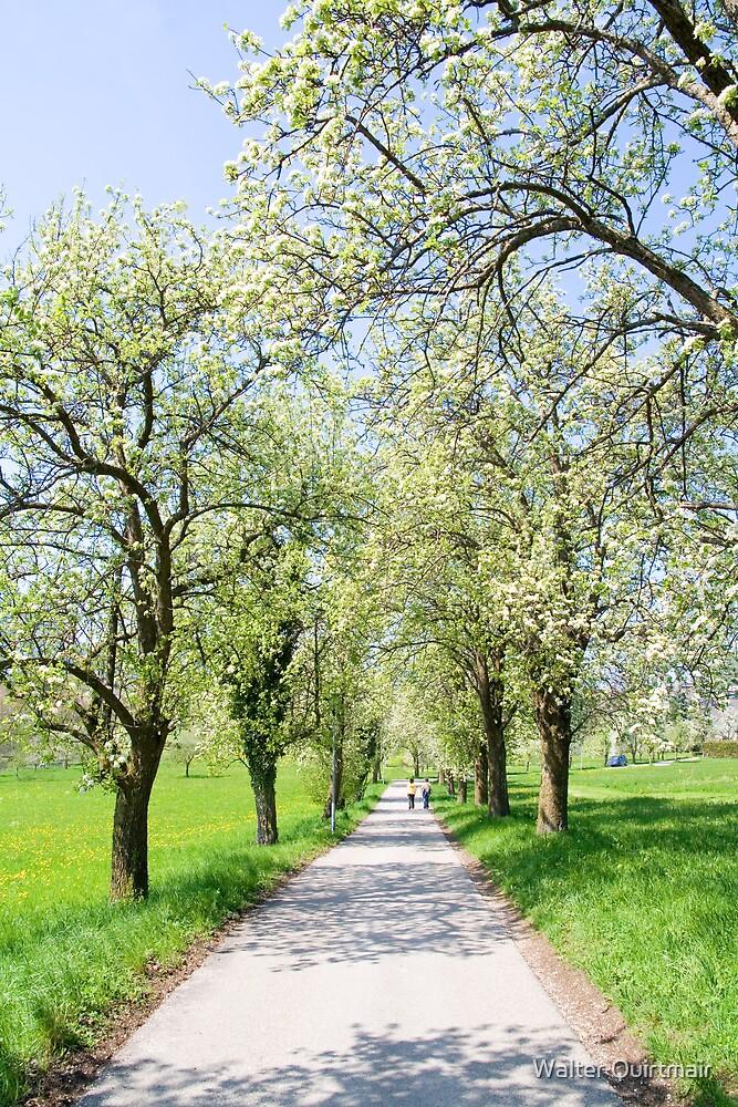 Spring Walk by Walter Quirtmair