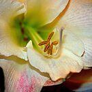 Amaryllis Close-up. by Billlee