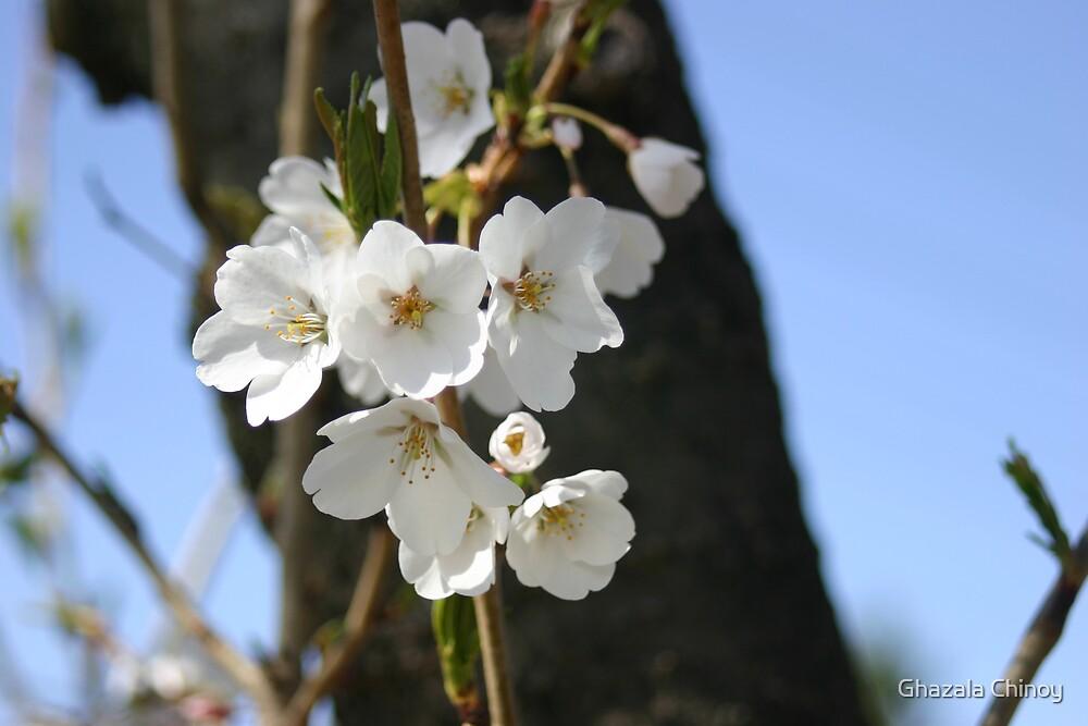 Blossom by Ghazala Chinoy