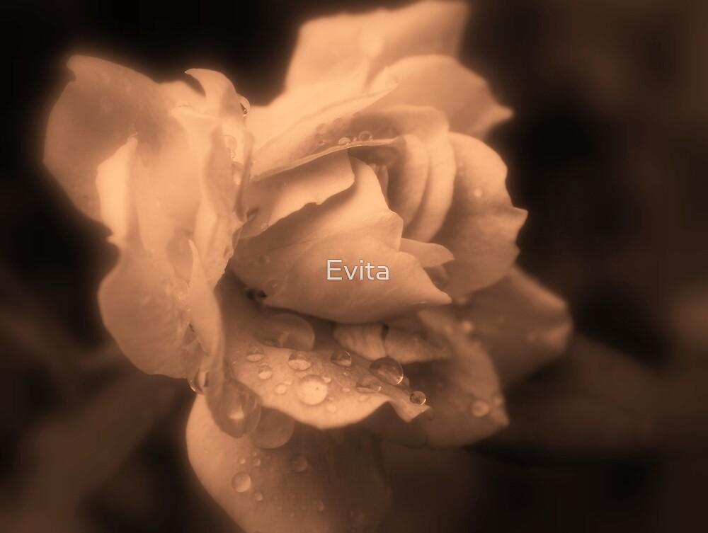 Monochrone Rose by Evita