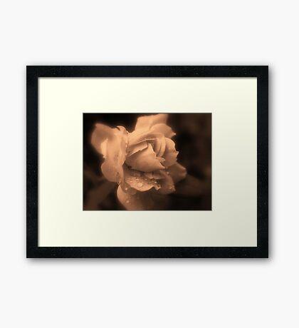 Monochrone Rose Framed Print