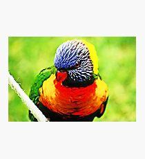 Rainbow Lorikeet #2 Photographic Print
