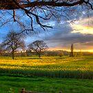 Sunburst by Tony Fallon