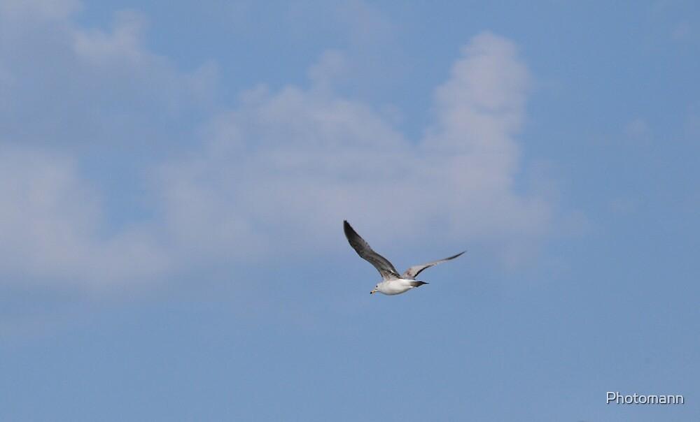 In Flight by Photomann