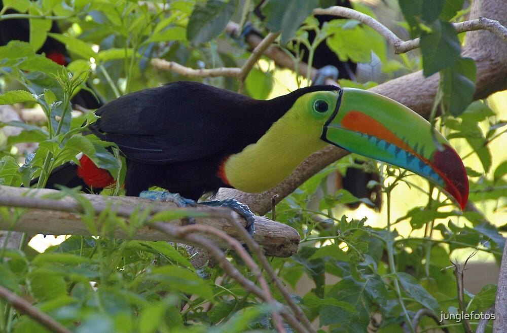 Keel Billed Toucan by junglefotos
