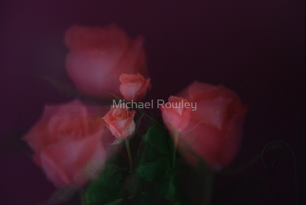 ROSES 1 by Michael Rowley