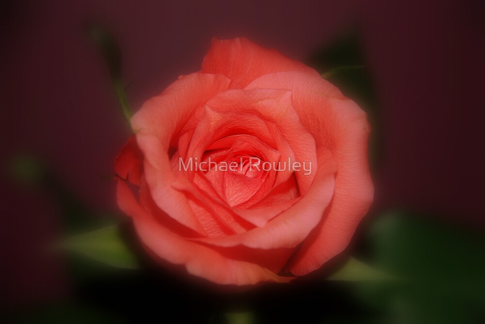 ROSES 2 by Michael Rowley