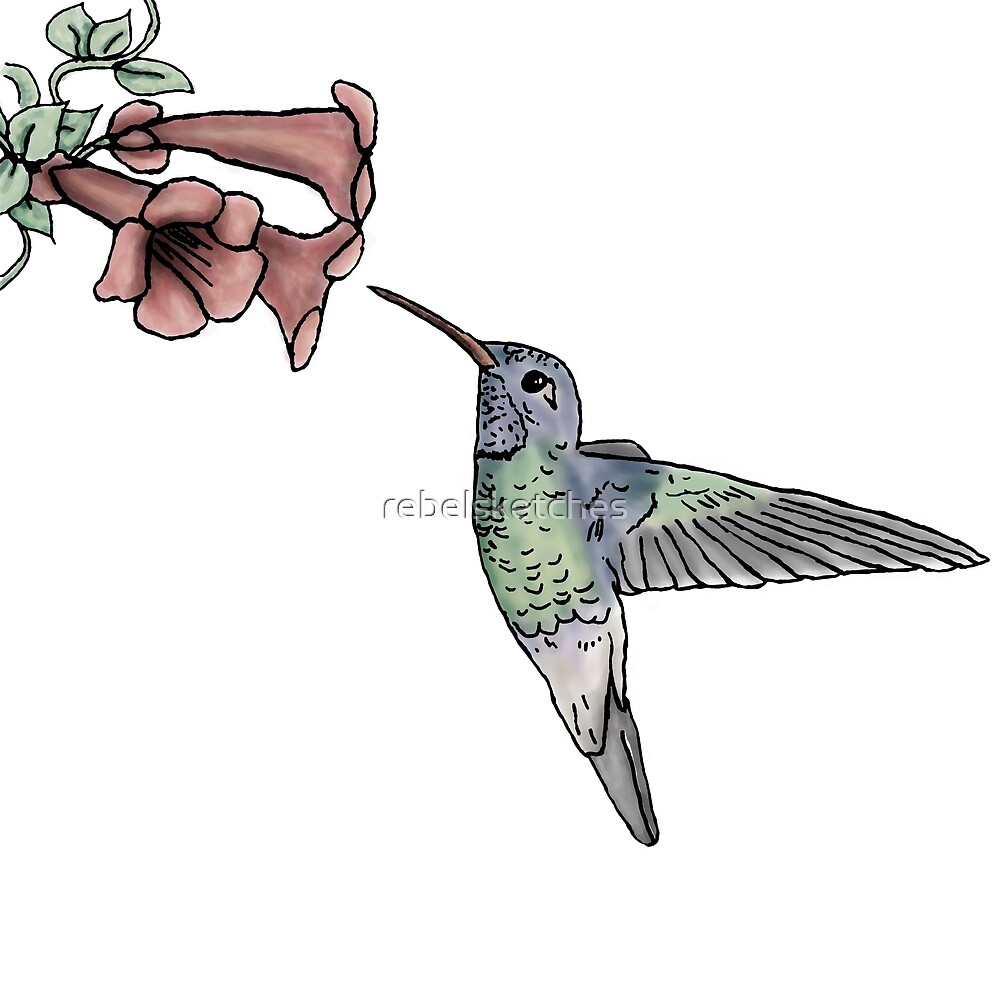 Hummingbird by rebelsketches
