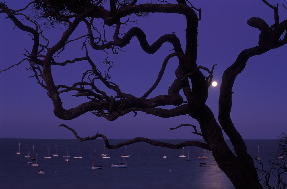 Fullmoon thru tree by matt mackay