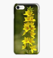 Dotted Yellow Loostrife, Muckross Head, Donegal iPhone Case/Skin