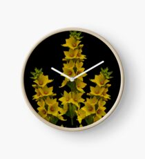 Dotted Yellow Loostrife, Muckross Head, Donegal Clock