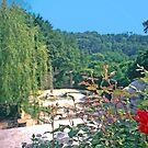 Roses, Dumbarton Oaks, Washington, DC by Priscilla Turner