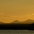 Geese over Derryveagh mountains at Twilight by George Row