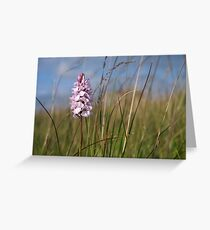 Spotted Orchid,  Portnoo, Co. Donegal Greeting Card