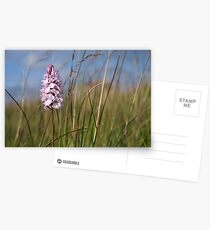Spotted Orchid,  Portnoo, Co. Donegal Postcards