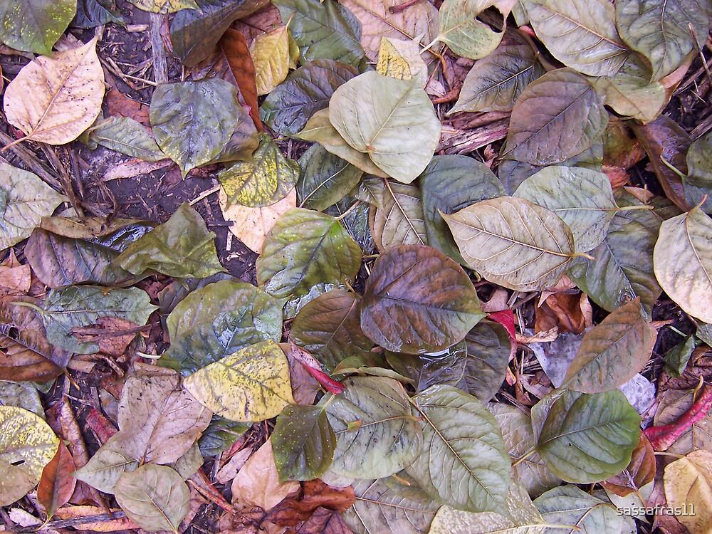 Leaves by sassafras11