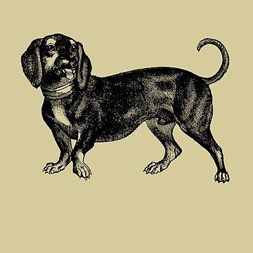 Vintage Dachshund Illustration by TheNewAntique