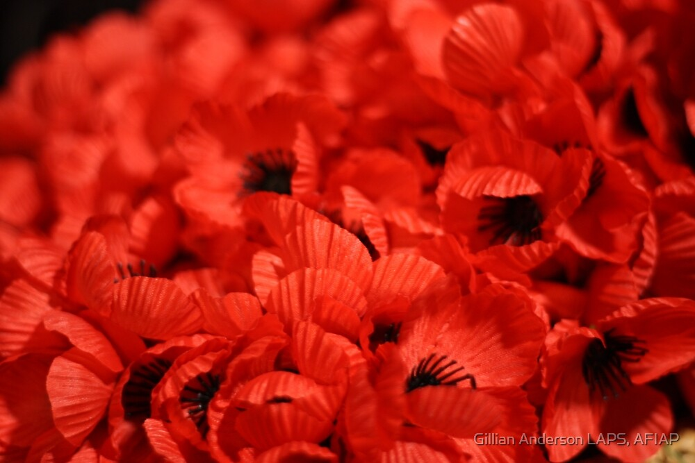 Remembrance poppies by Gillian Anderson LAPS, AFIAP