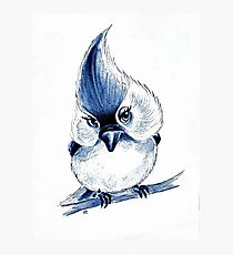 Titmouse In Blue Photographic Print