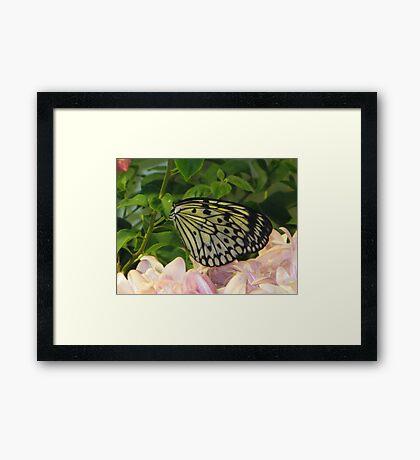 Butterfly 5 Framed Print