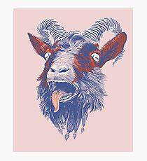 Rock Goat Photographic Print
