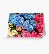 Japanese Hydrangeas Greeting Card