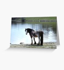 You Can Lead A Horse To Water...... Greeting Card