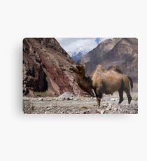 Camel on the Karakoram Highway Metal Print