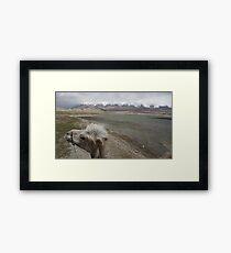 Camel at Lake Kara Kul Framed Print