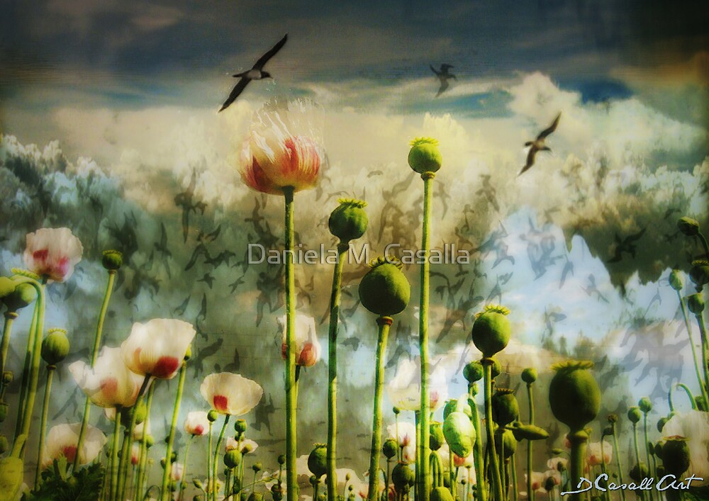 Let the flowers grow by Daniela M. Casalla