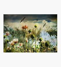 Let the flowers grow Photographic Print