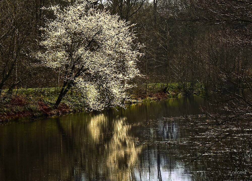Bloom by Kofoed